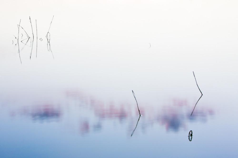 """Pond still life (sticks and still water), """"Secret Bird Pond"""", Trinity River Audubon Center, Dallas, Texas, USA."""