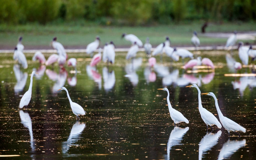 Dallas Observer Article on Great Trinity Forest