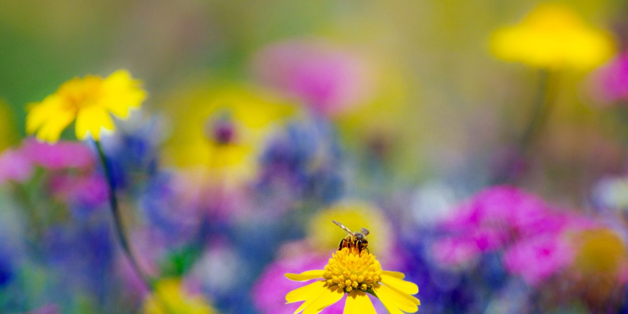 Bee in Wildflowers