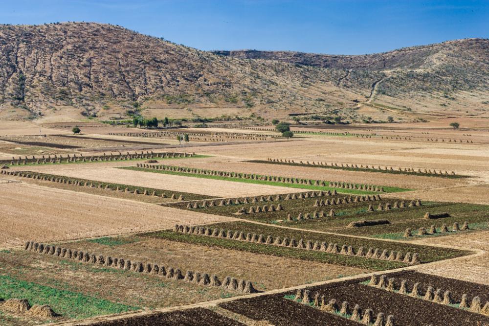 Field Pattern