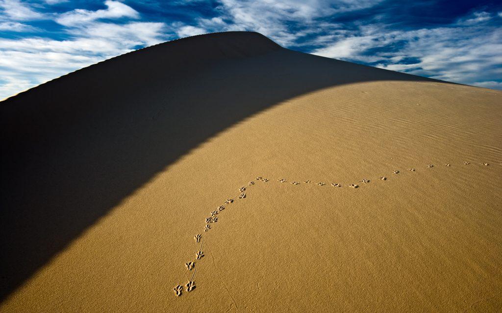 Tracks on Dune