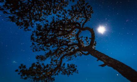 Pinyon and Stars