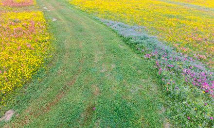 Path Through Wildflowers