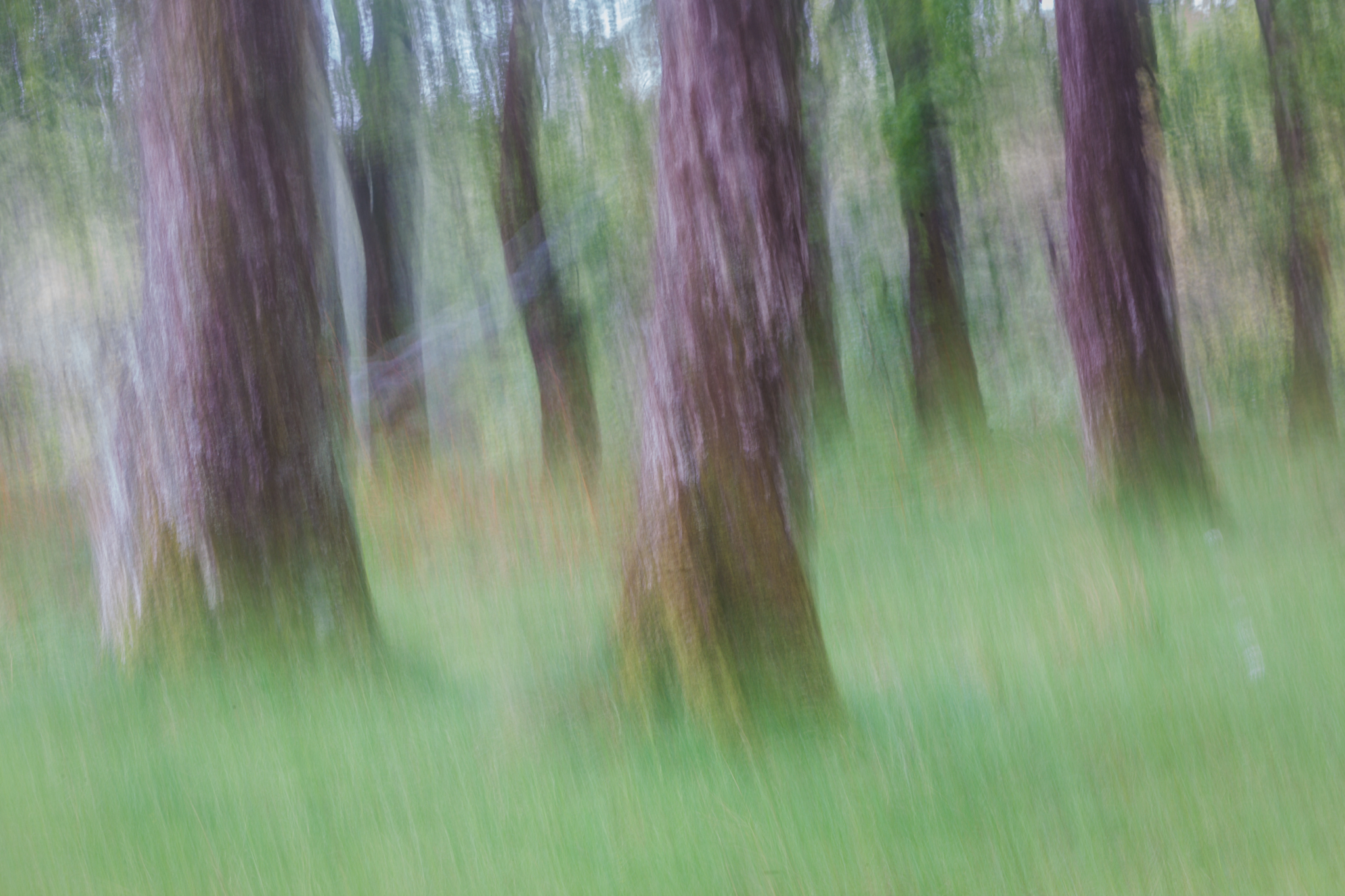 Irish Blur