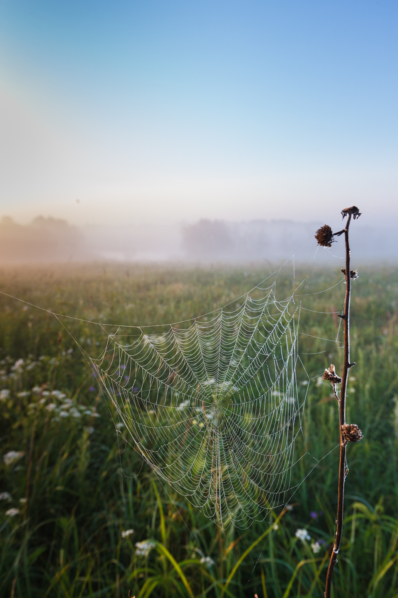 Spider Web on Blackland Prairie