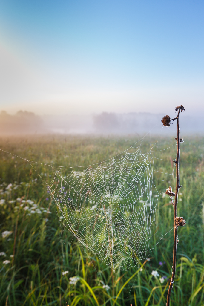 Backlit spider webs at sunrise with mist and fog on Blackland Prairie at Clymer Meadow Preserve, Texas Nature Conservancy, Greenville, Texas, USA.