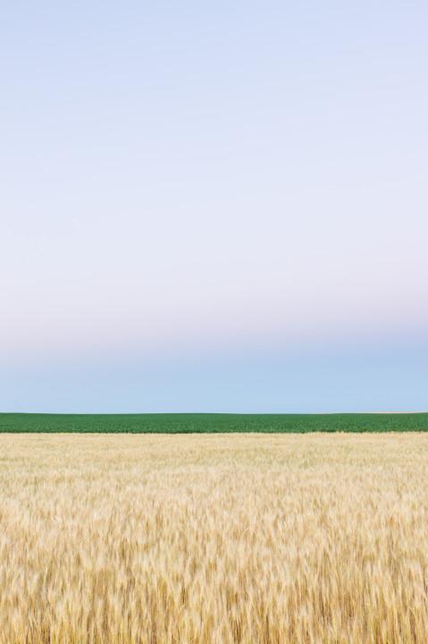 Dusk on Field