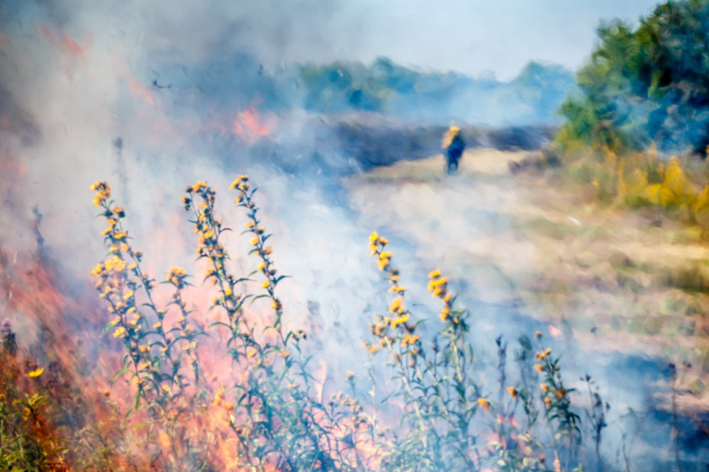 Prairie Fire and Sunflowers