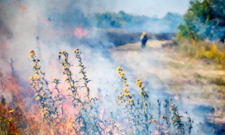 Impressionism Prairie Fire