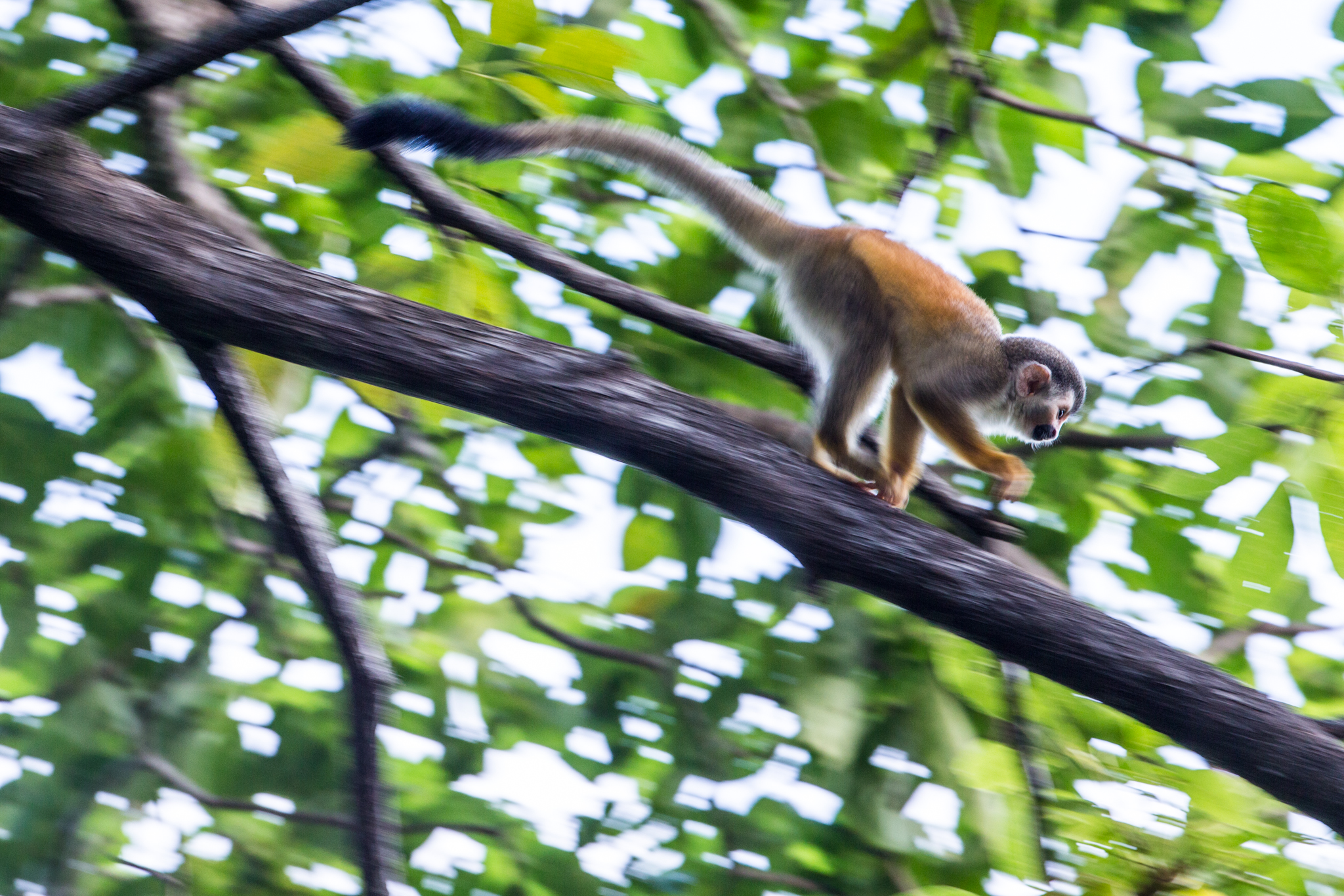 Monkey Motion