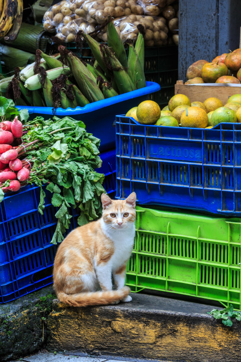 Cat in Market