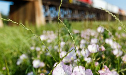 Train and Flowers