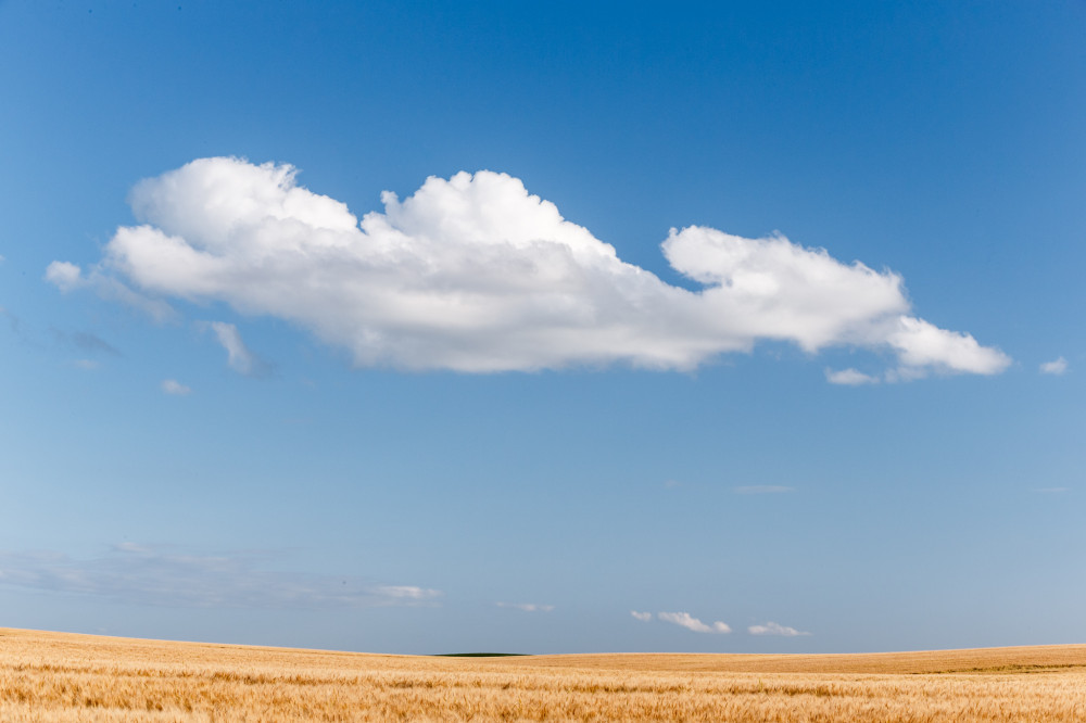 Sky and Wheat Field