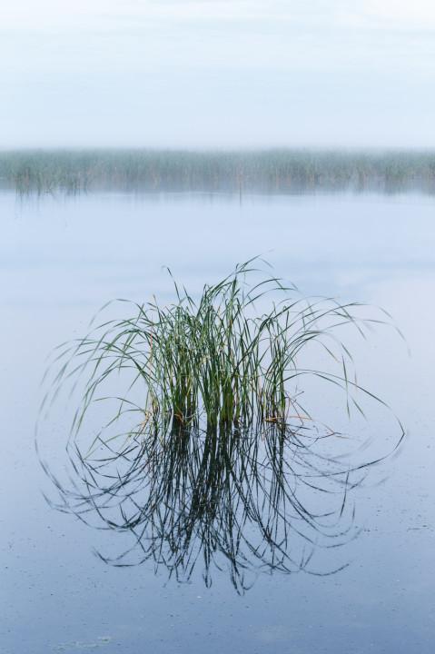 Wetland Still Life