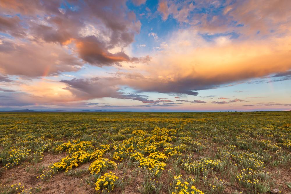 Wildflowers and Prairie