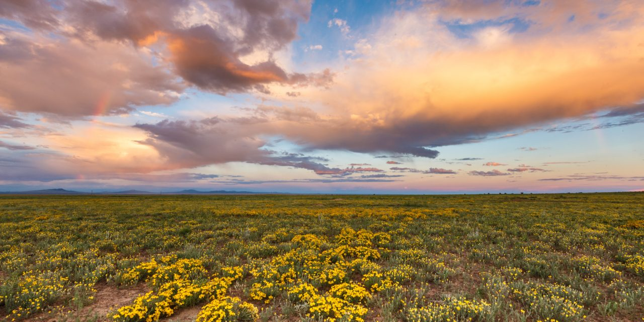 Rainbow, Wildflowers, and Georgia O'Keeffe Sky