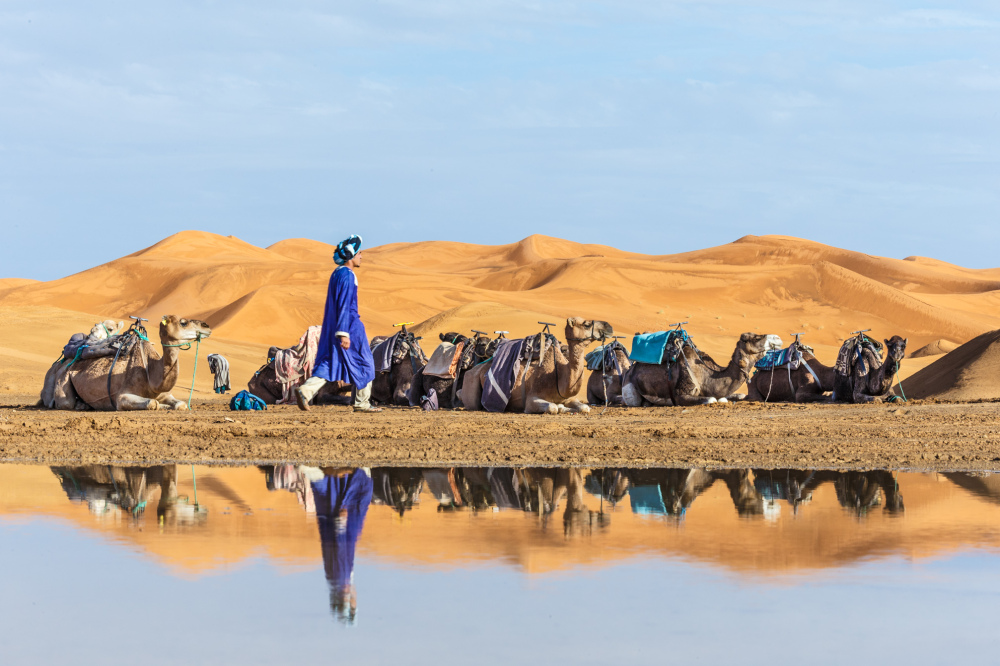 Camel Caravan Reflections