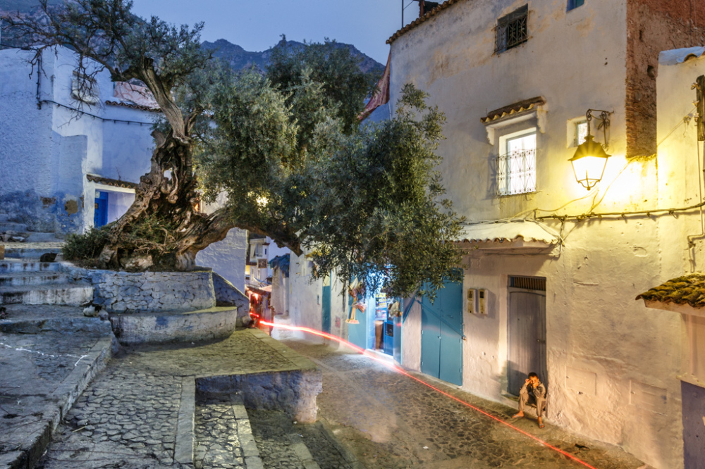 Olive Tree and Street