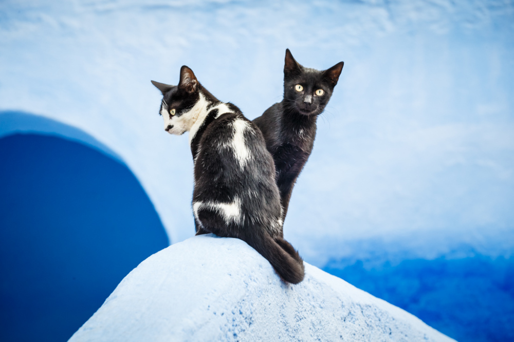Black Cats and Blue Wall