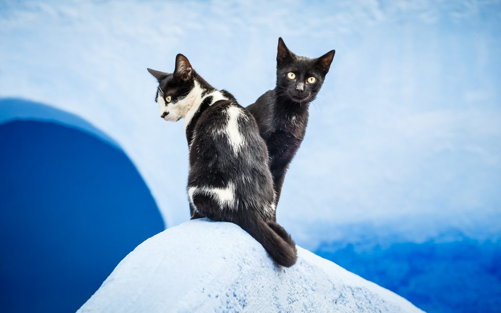 Cats on Blue Wall