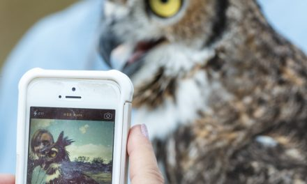 Owl and iPhone