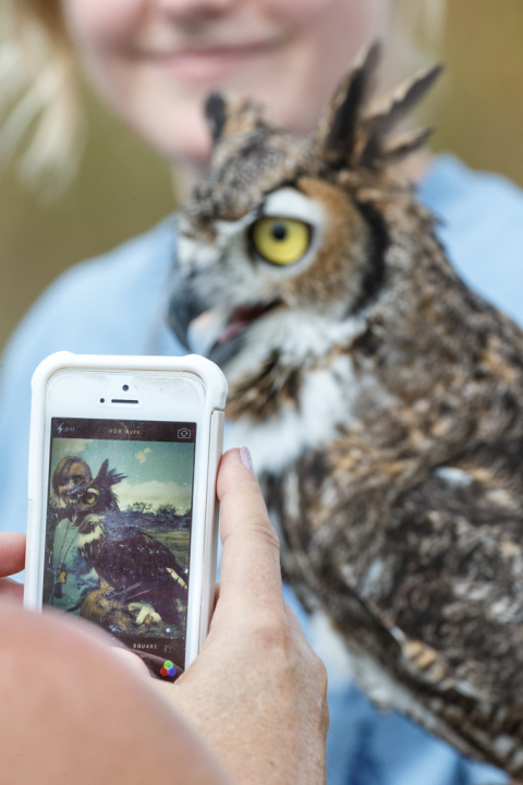 Photographing Great Horned Owl