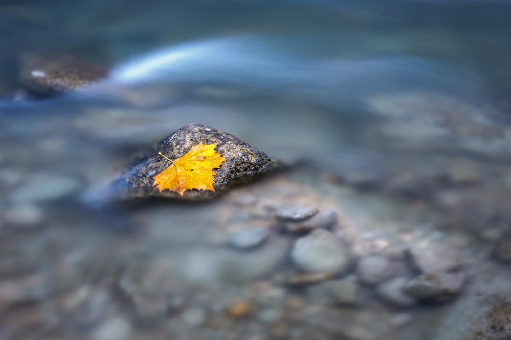 Autumn Leaf on Rock