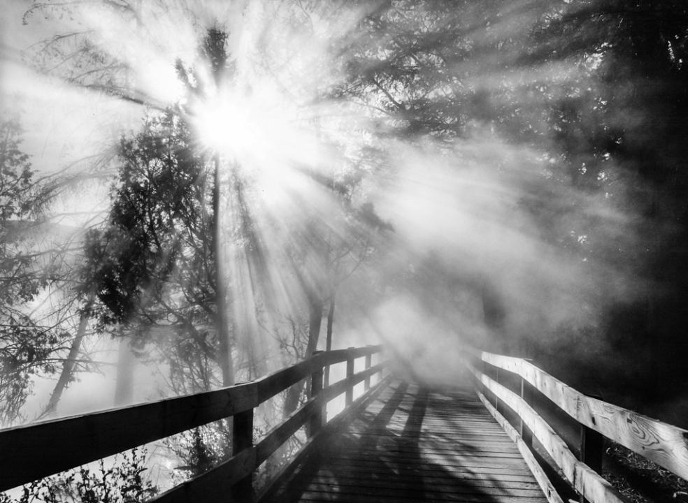 Boardwalk in Mist
