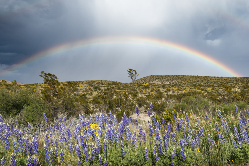 Rainbow and Bluebonnets