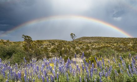 Bluebonnets and Rainbows