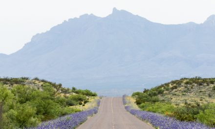 Big Bend in Bloom
