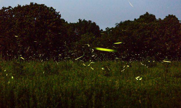 Firefly Fireworks