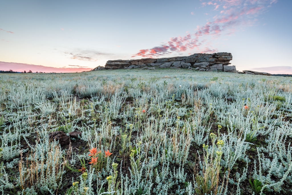Castle Rock, wildflowers and sage at sunrise, Vermejo Park Ranch, New Mexico, USA.