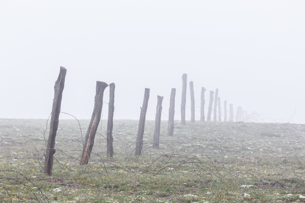 Mist and old fenceposts dividing ranch at point above timberline, Vermejo Park Ranch, Colorado, USA. Ranch headquarters and majority of ranch is in New Mexico.