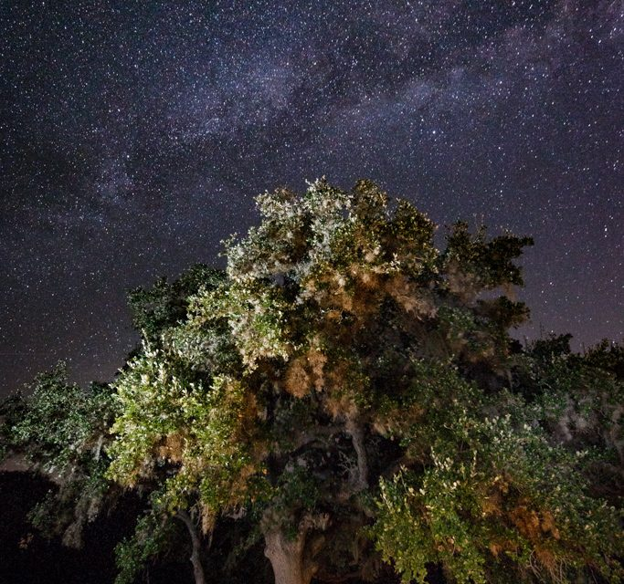 Judging the Wildlife in Focus Contest – Milky Way and Live Oak
