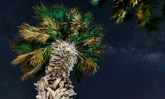 Stars and Palm Trees and the Rule of 500