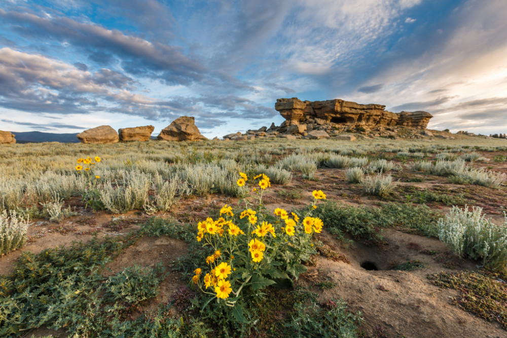 Cowpen daisy wildflowers below Castle Rock, Vermejo Park Ranch, New Mexico, USA.