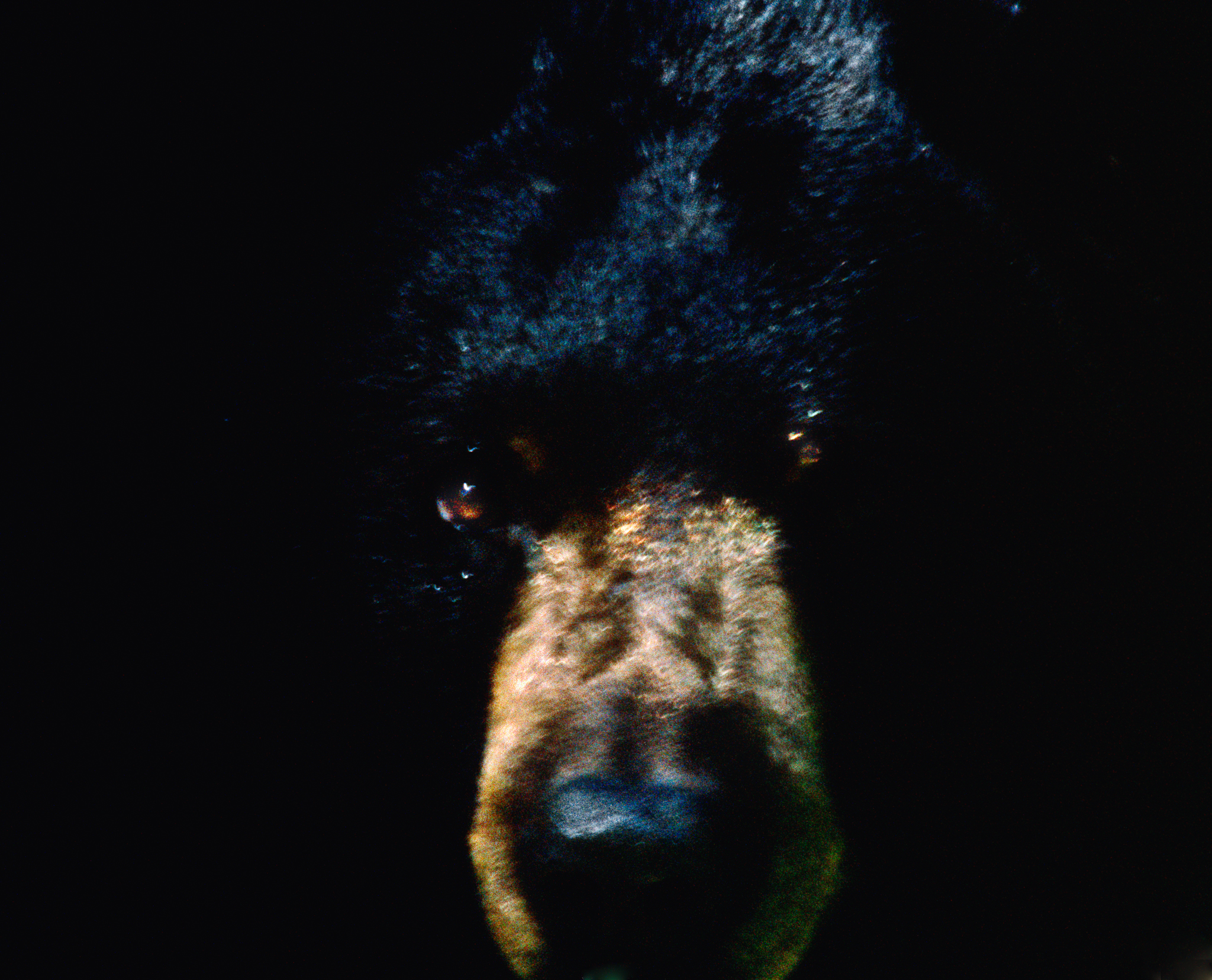 Black Bear Abstract