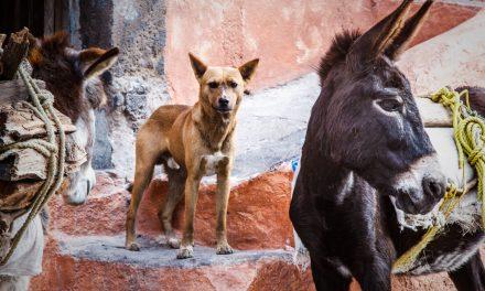 Burros and El Perro
