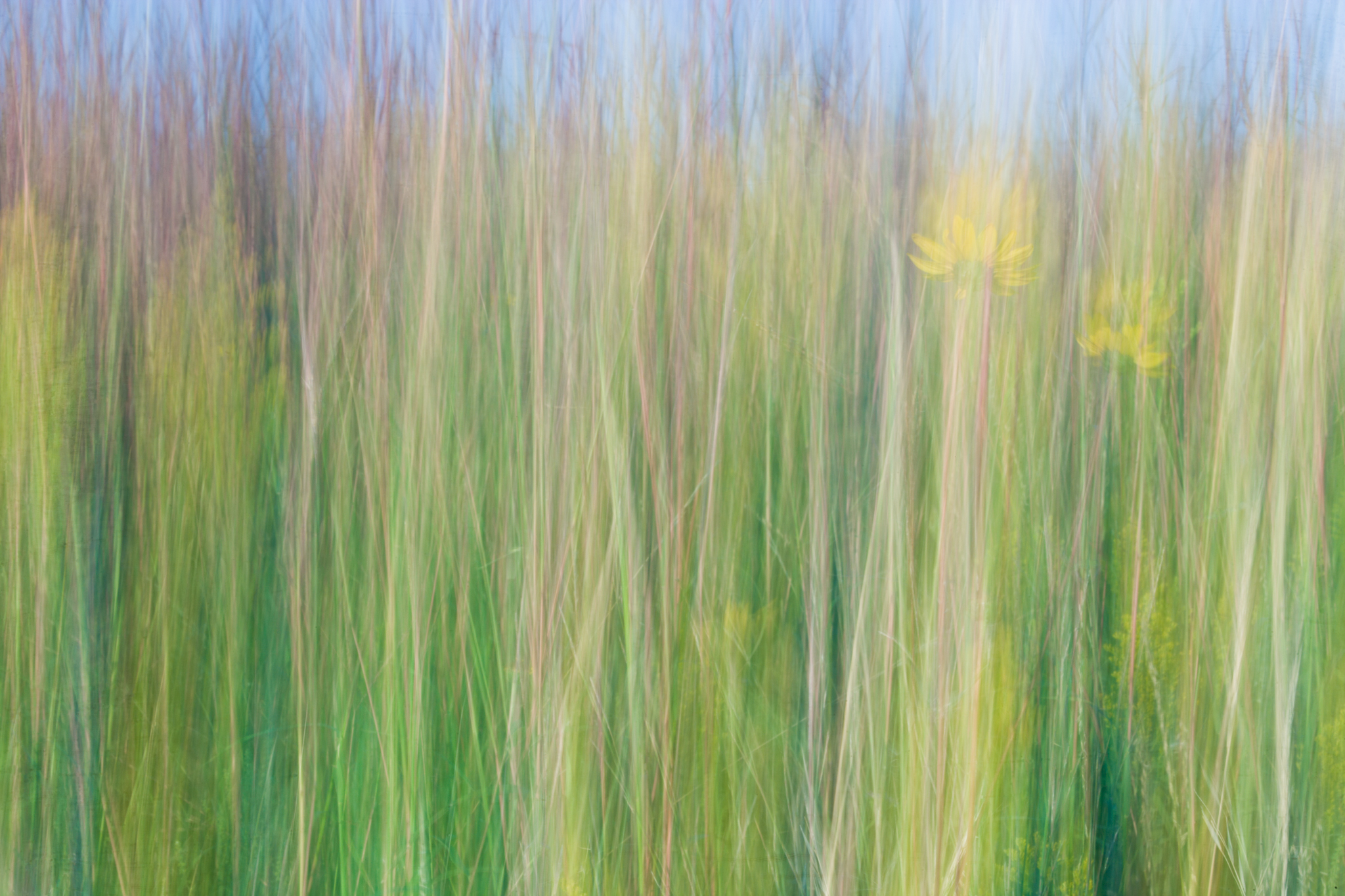 Prairie Abstract