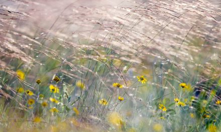 Wildflowers and Grasses