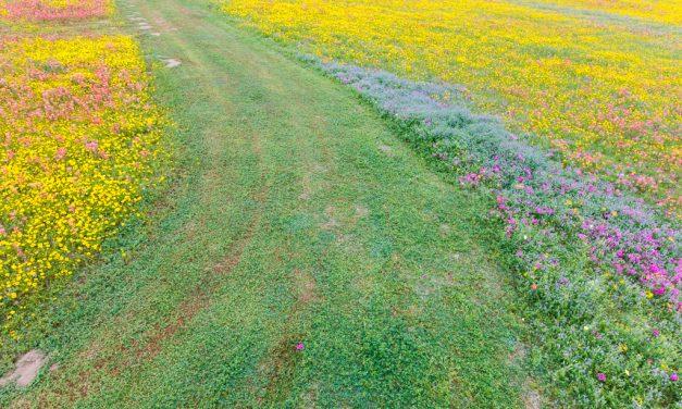 Path Through Wildflowers