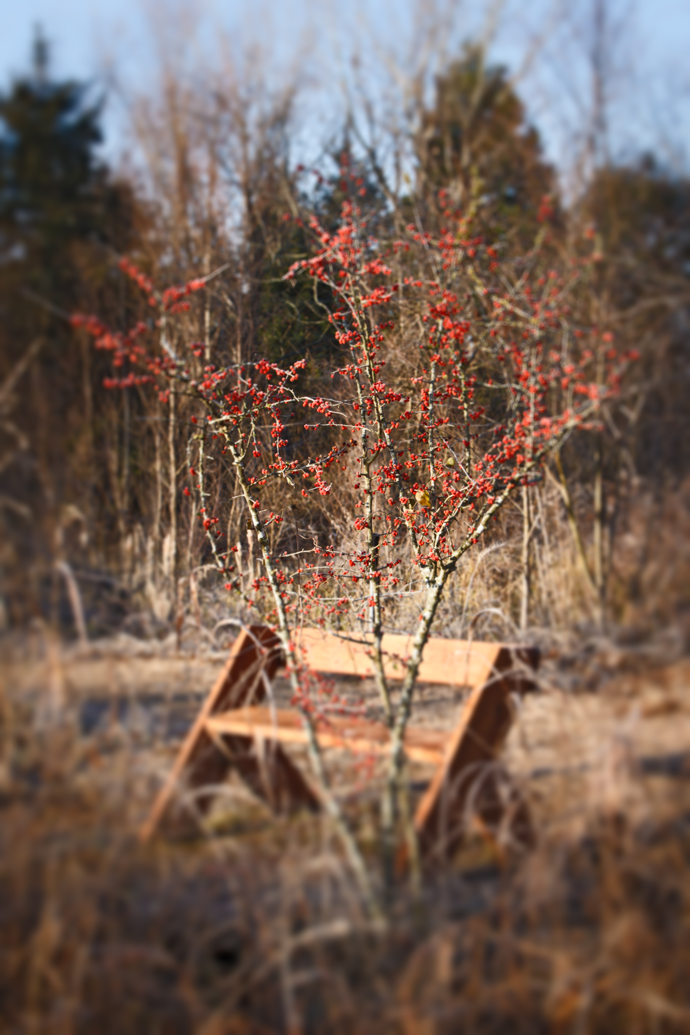 Berries and Bench