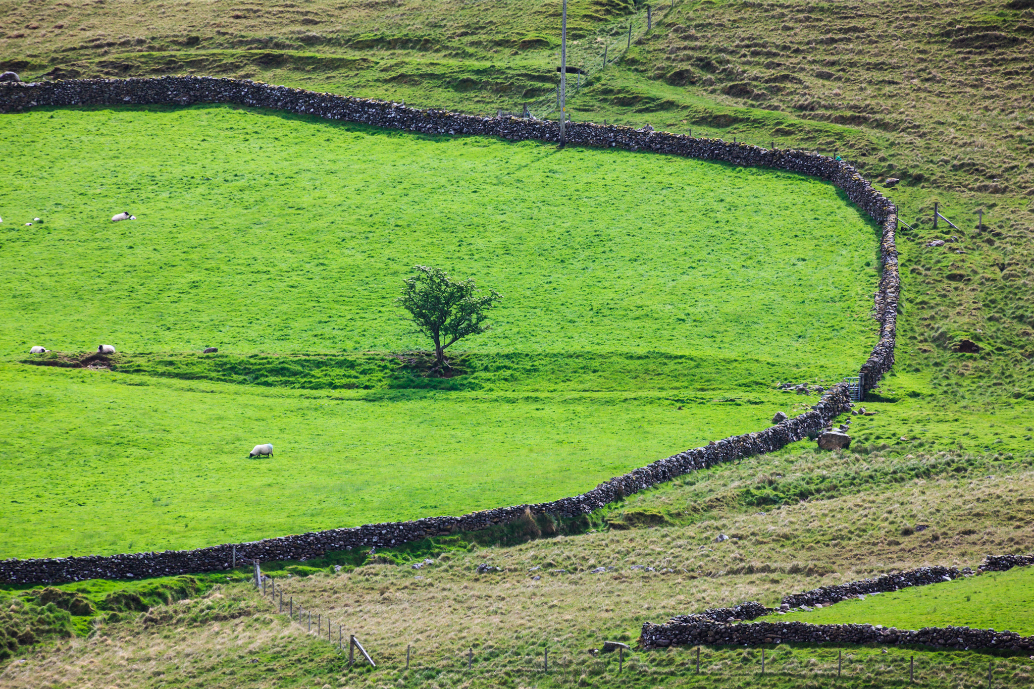Field of Green – Ireland
