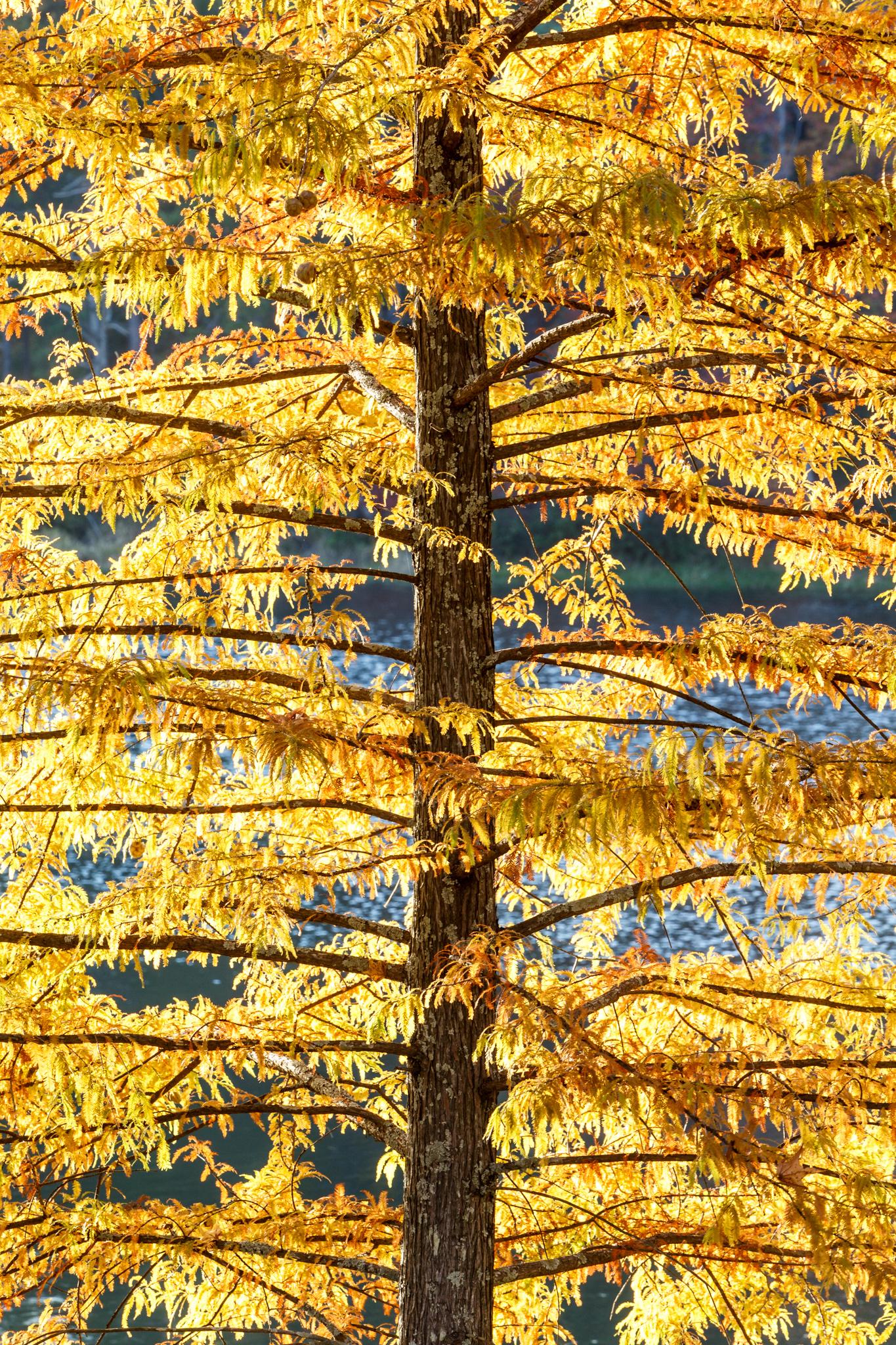 East Texas Autumn