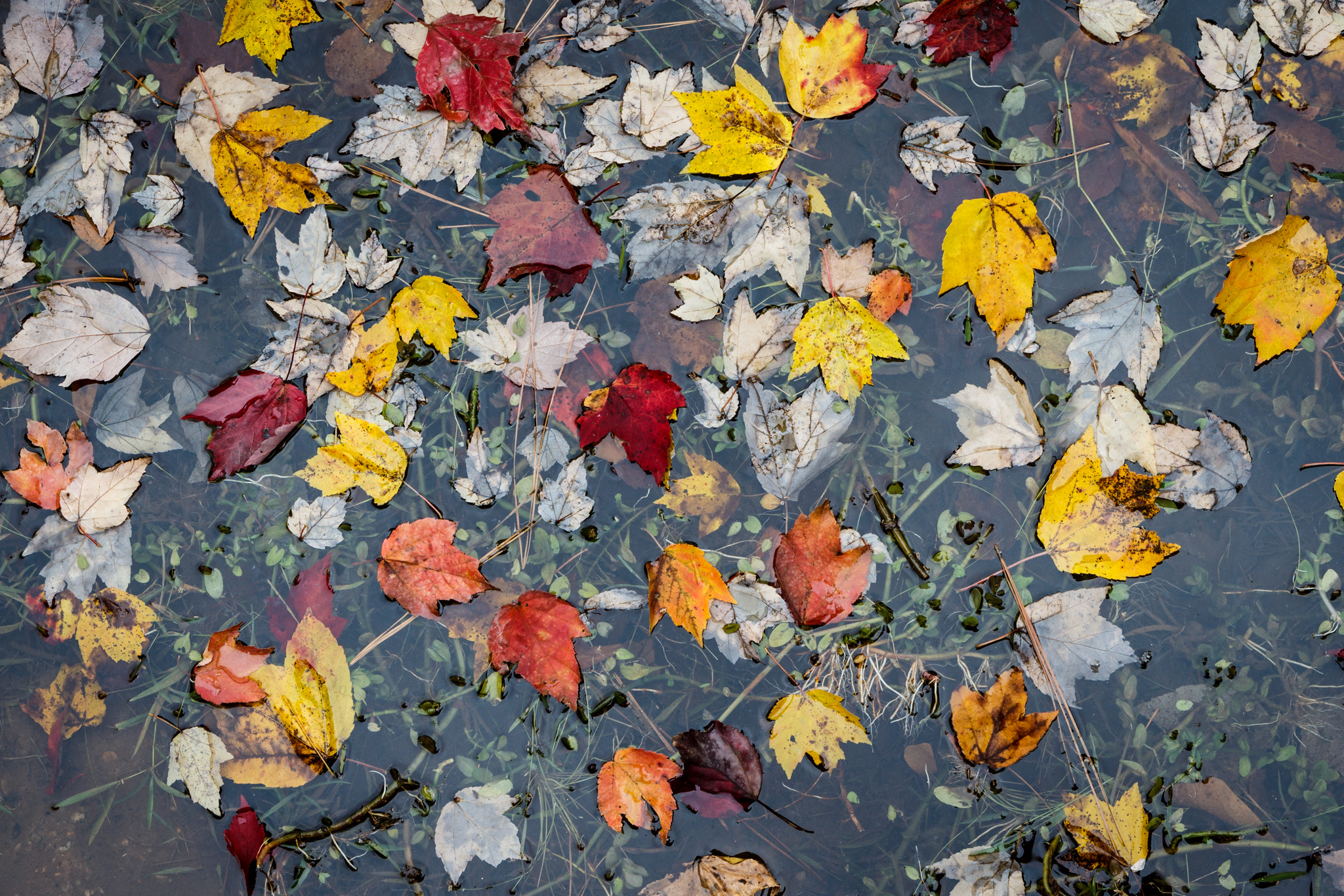 Leaves in Water