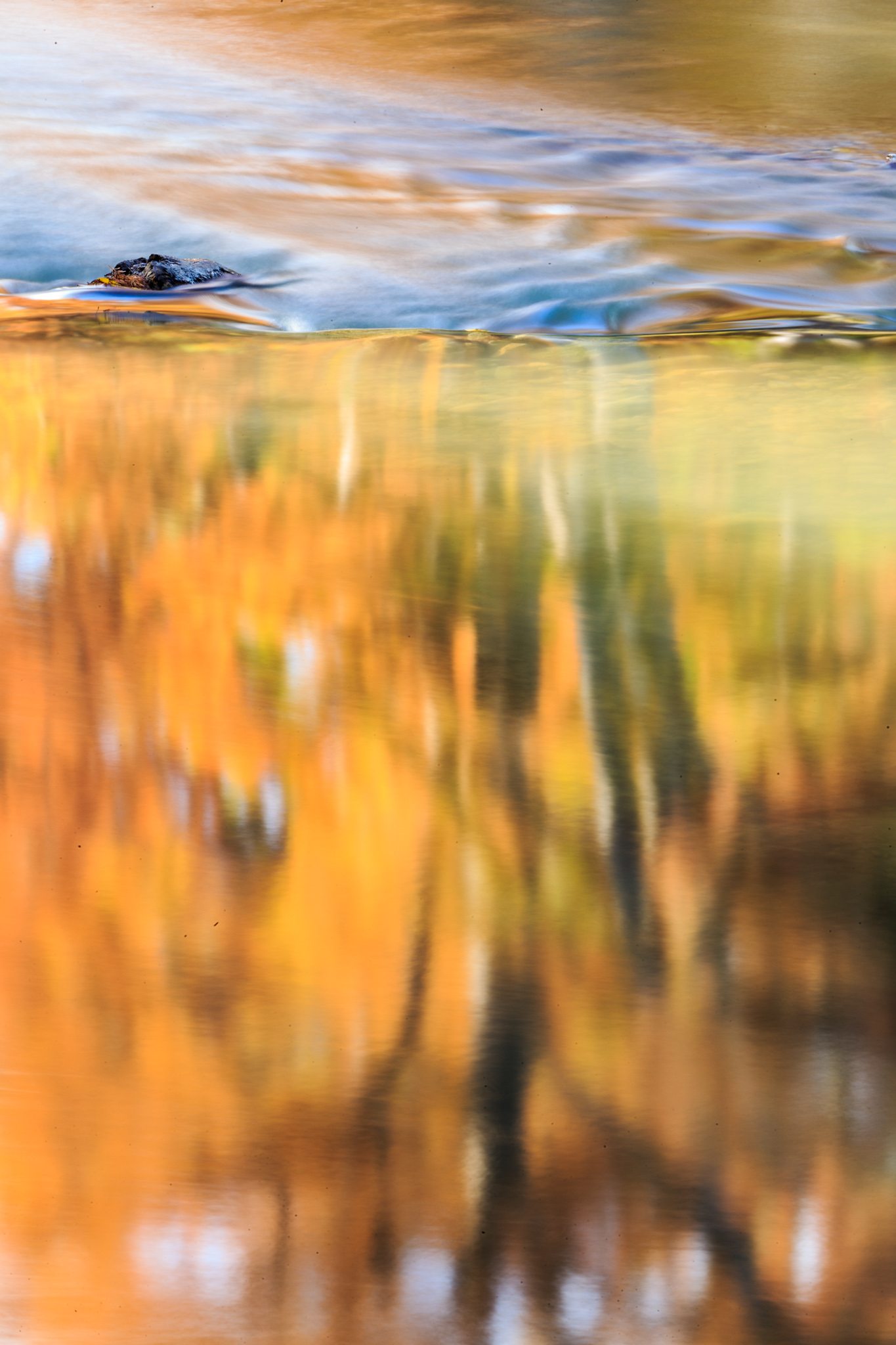 Autumn River Abstract