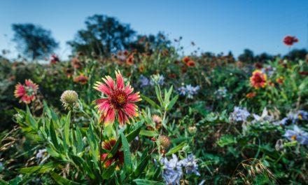 Big Springs Wildflowers
