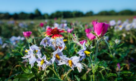 Big Spring Wildflowers