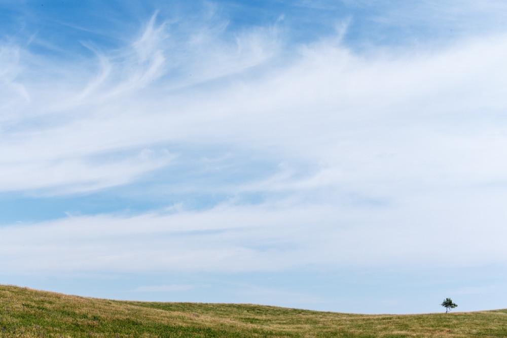 Field, Sky, Tree.